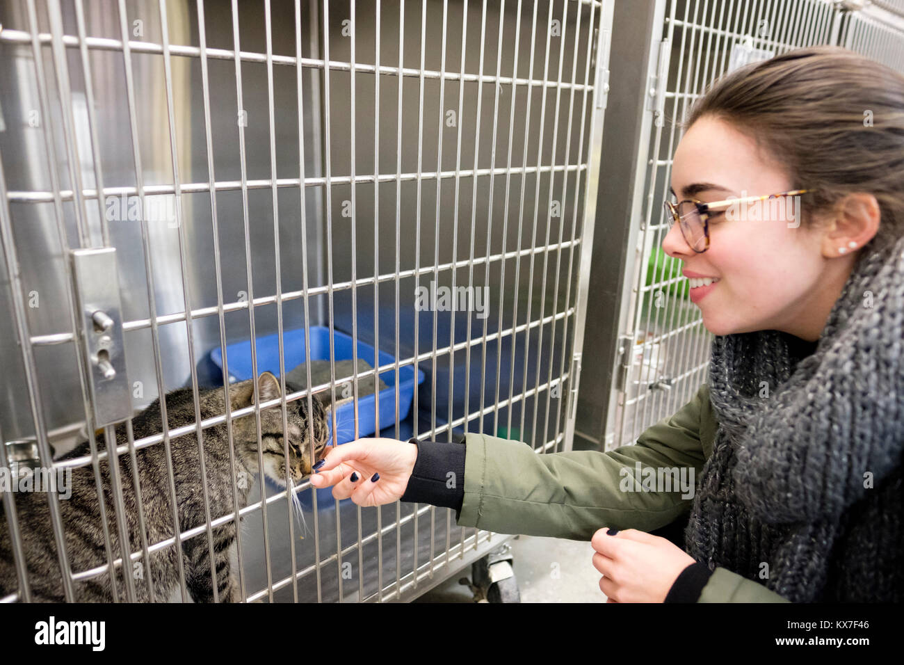 Teenager girl petting a caged domestic cat being offered for adoption at a pet store in London, Ontario, Canada. - Stock Image