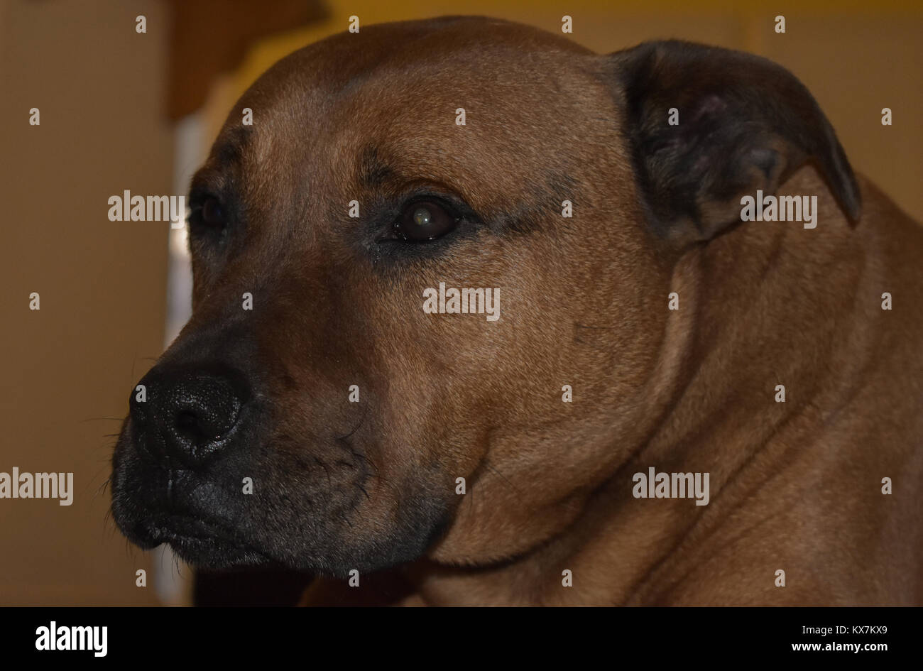 Picture of my dog and how depressed he looks after he wakes up, my dog's name is lucky and atleast he has a - Stock Image