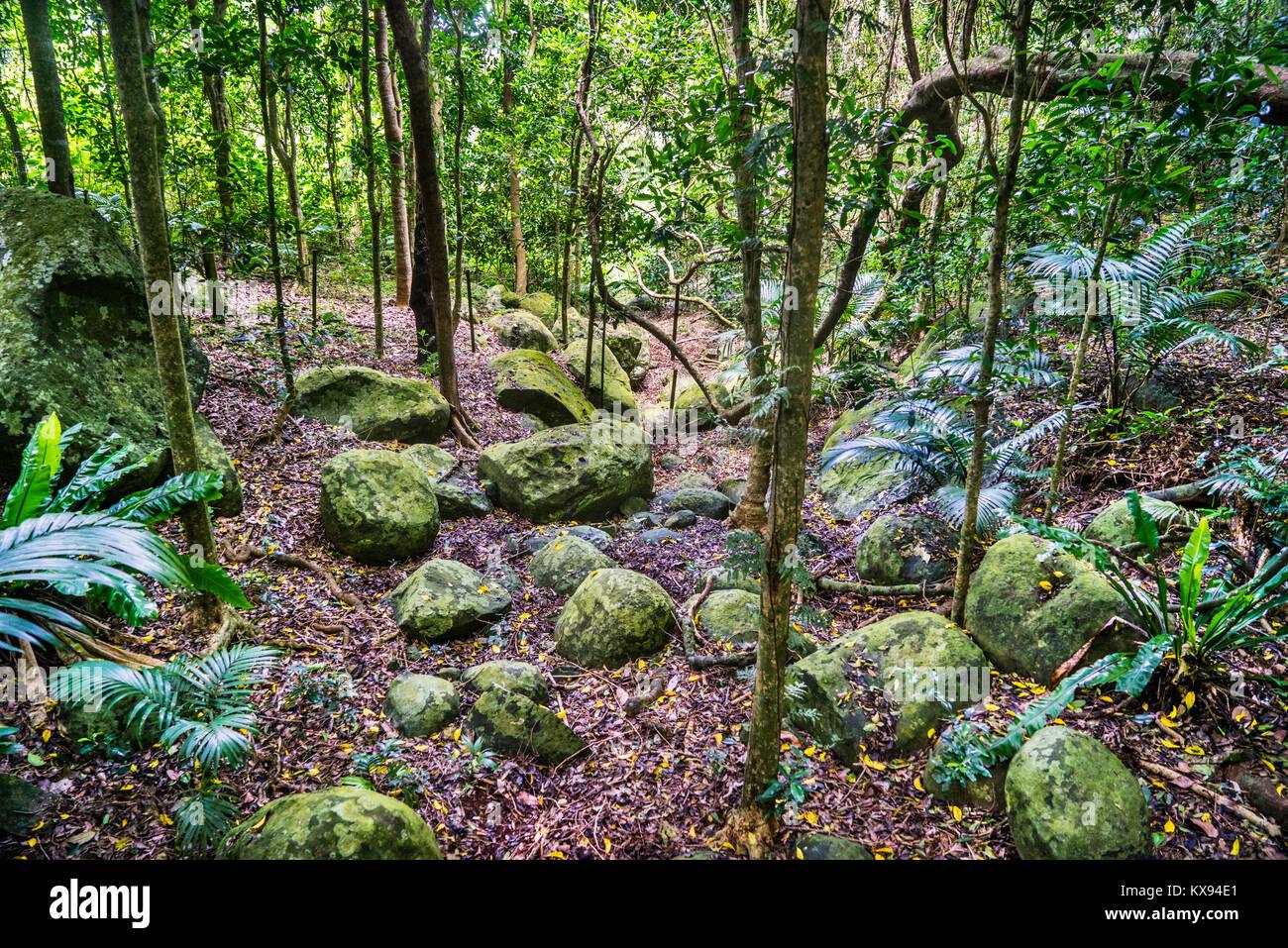Norfolk Island, Australian external territory, fern gully at Norfolk Island Botanical Garden - Stock Image
