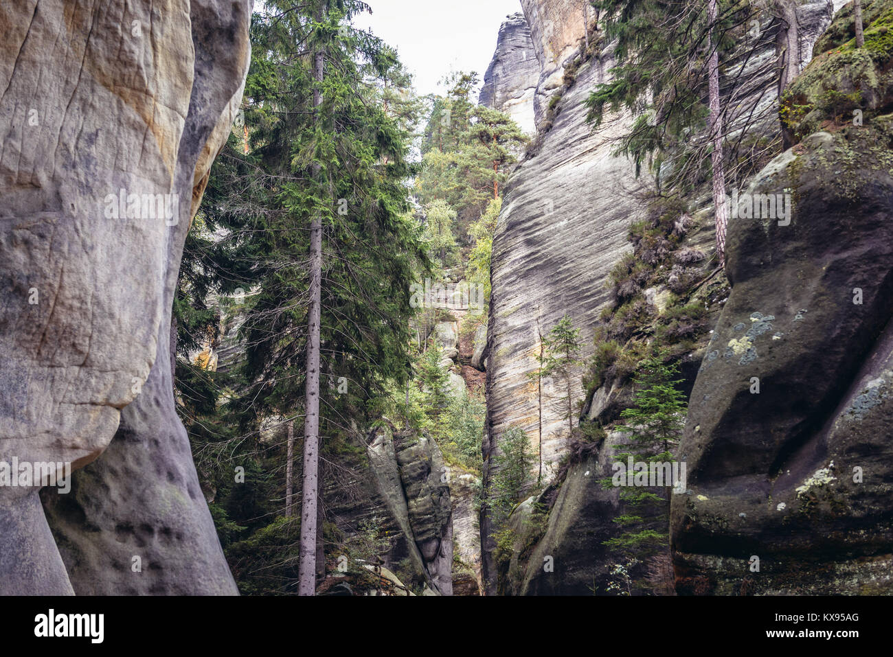 National Nature Reserve Adrspach-Teplice Rocks near Adrspach village in northeastern Bohemia region, Czech Republic - Stock Image