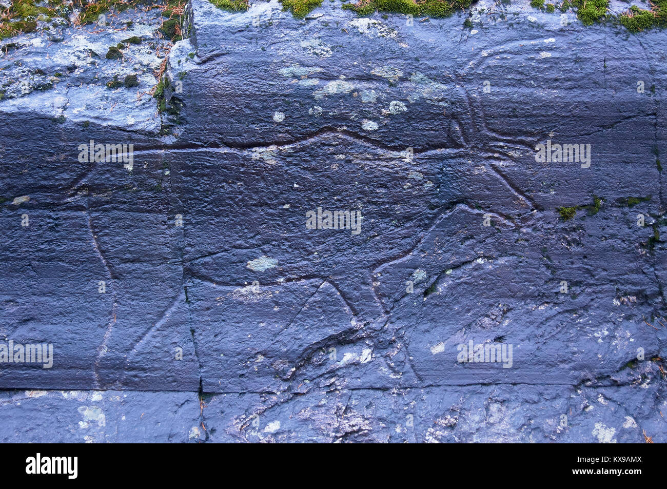 Reindeer rock carving at Bolareinen, Steinkjer, Nord-Trondelag, Norway.  Approx 6000 years old - Stock Image