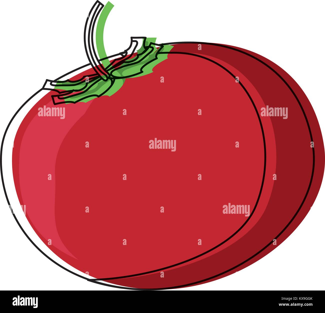 Field Tomato Stock Vector Images Alamy Plant Diagram Vegetable Icon