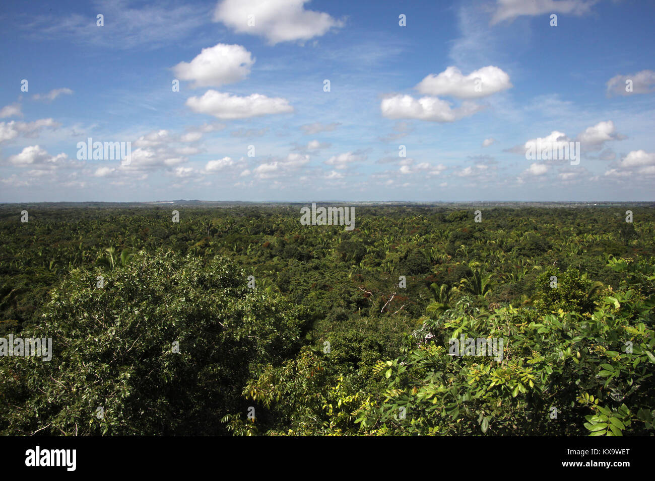Beautiful countryside of Belize looking across the jungle to the horizon under a blight blue sky, Central America. Stock Photo