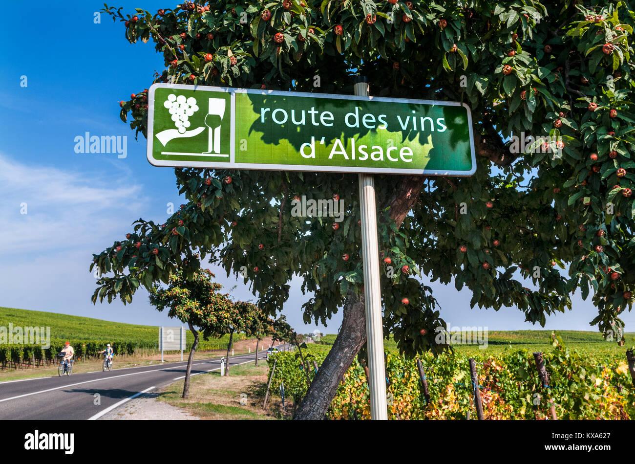 WINE ROUTE Route des Vins d'Alsace road sign in vineyards near Riquewihr Tourists cyclists exploring vineyards Riquewihr Stock Photo