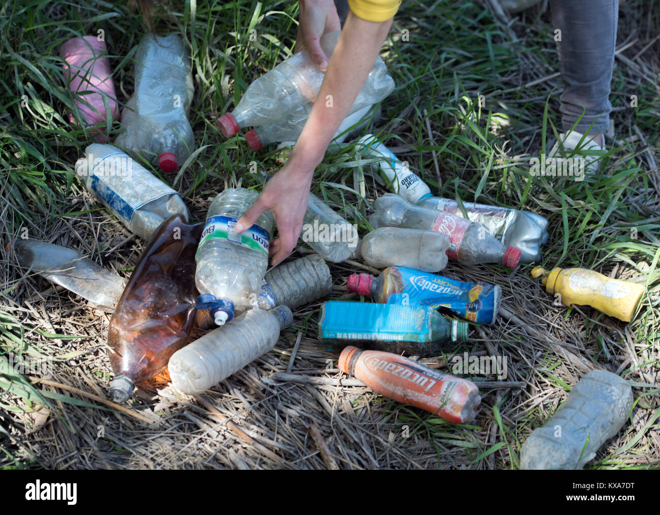 A member of 'City To Sea', a campaign to rid Bristol of plastic bottle waste collecting waste bottles on the banks - Stock Image