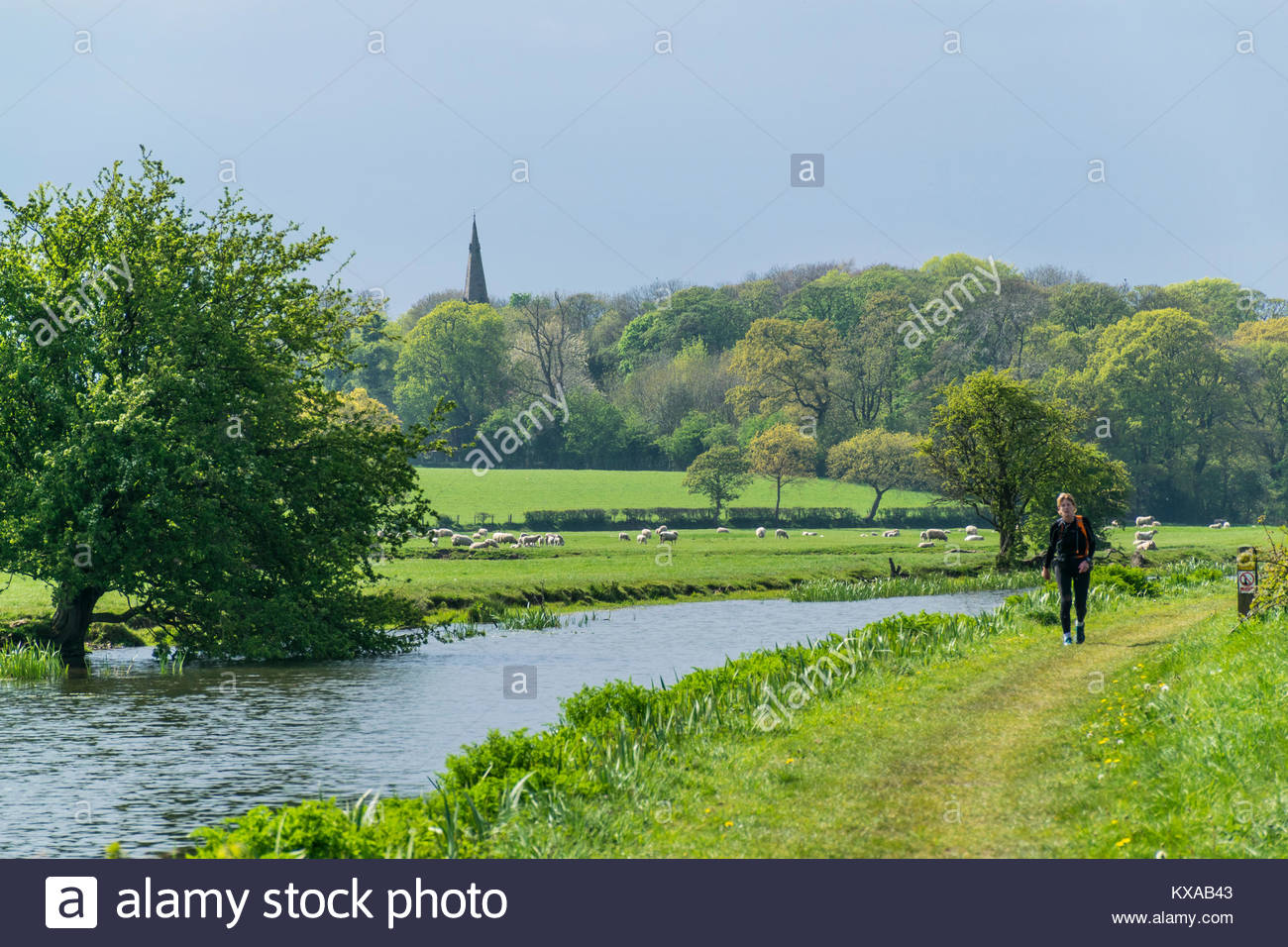 A walker on the towpath of the Glasson Branch of the Lancaster Canal that goes from Galgate to Glasson Dock, with - Stock Image