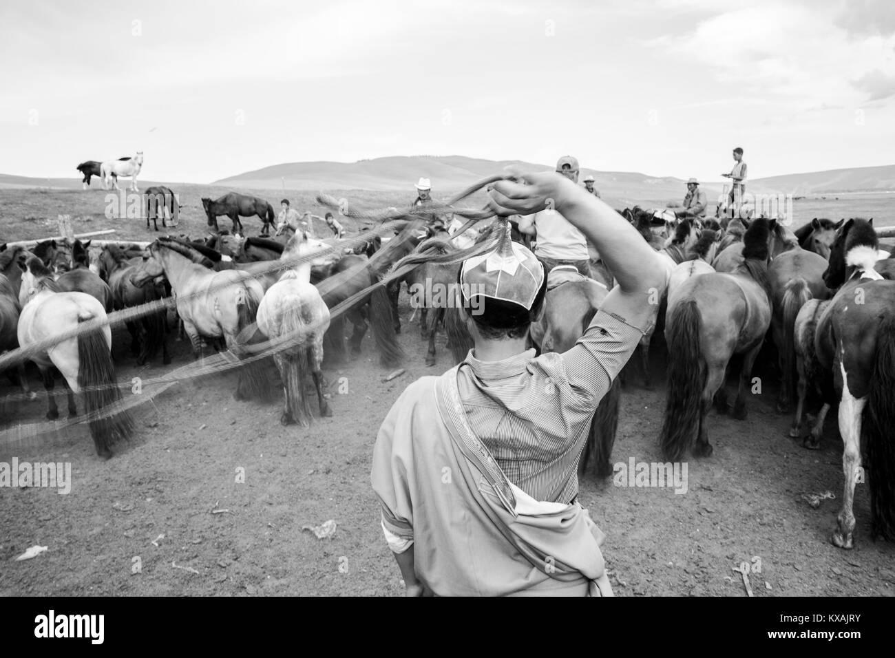 Mongol horseman lassoing horse, Bunkhan, Mongolia - Stock Image