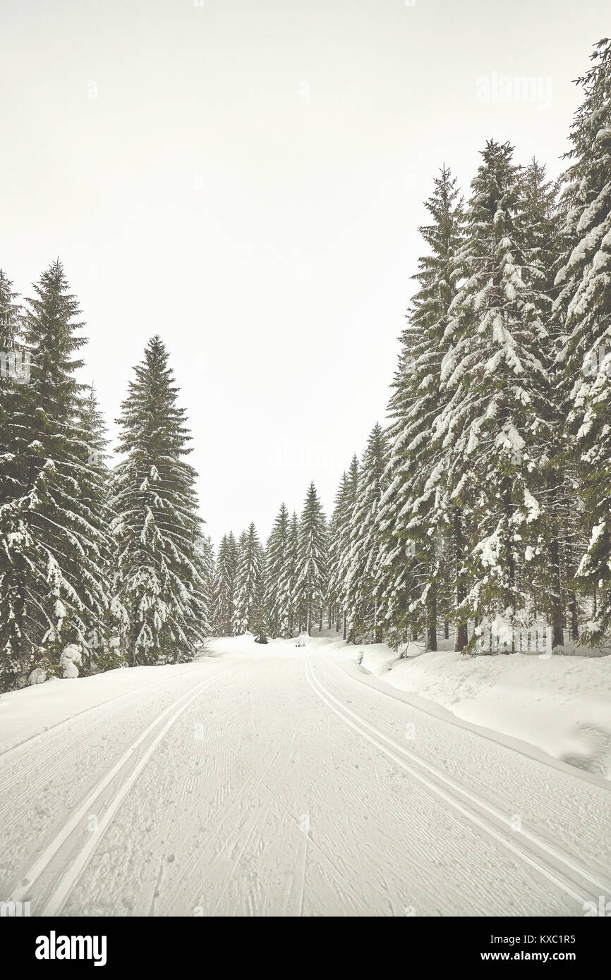 Retro stylized pictur of a winter forest landscape with cross country skiing tracks, Poland. - Stock Image