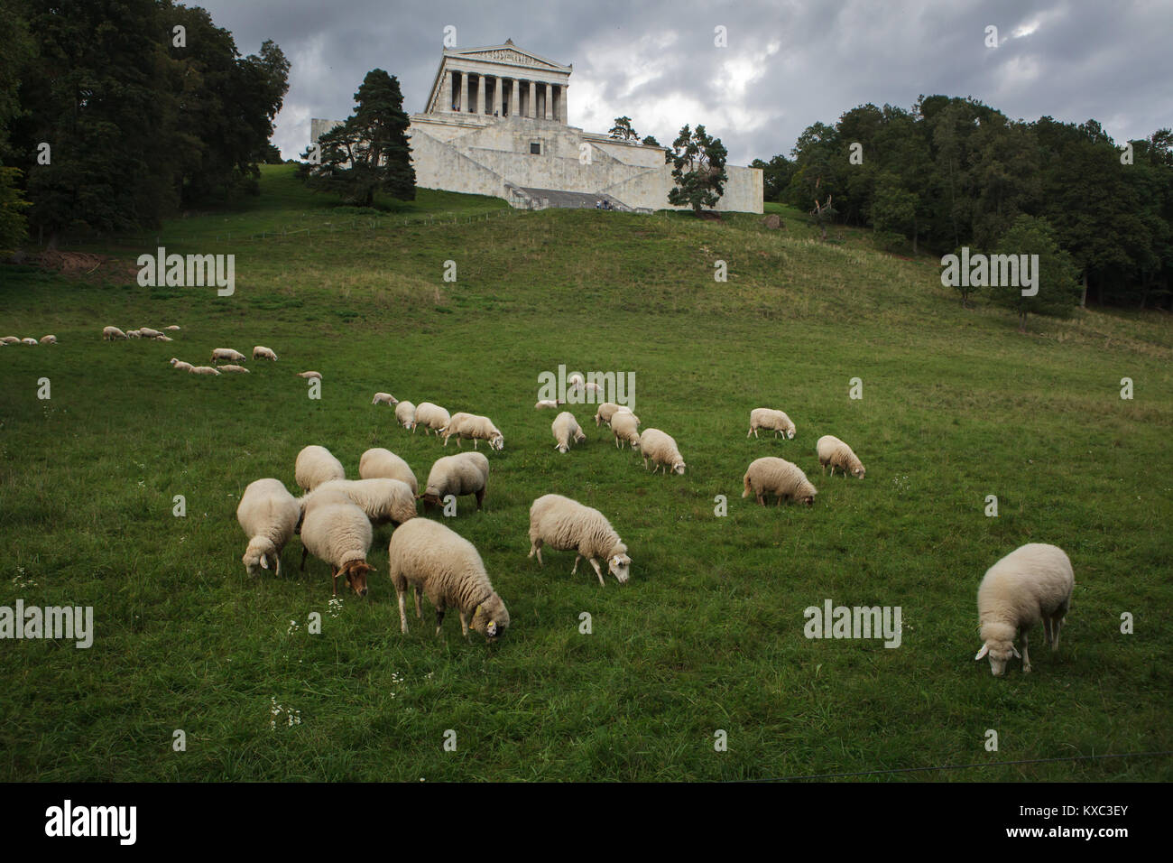 Sheep pasturing on the meadow in front of the Walhalla Memorial near Regensburg in Bavaria, Germany. Photo by Vova Stock Photo