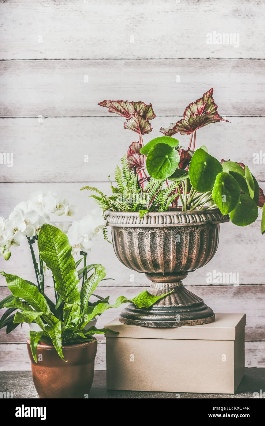 Various Green Home Plants And Flowers In Pot And Planting Urn On