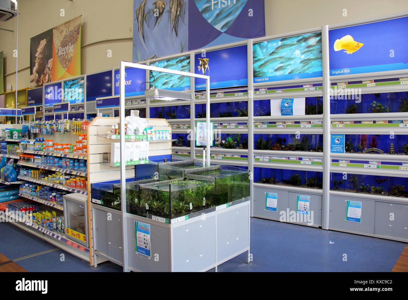 England, Kent, Orpington – Circa July 2014: Tropical and cold water fish for sale, also equipment and food for sale - Stock Image