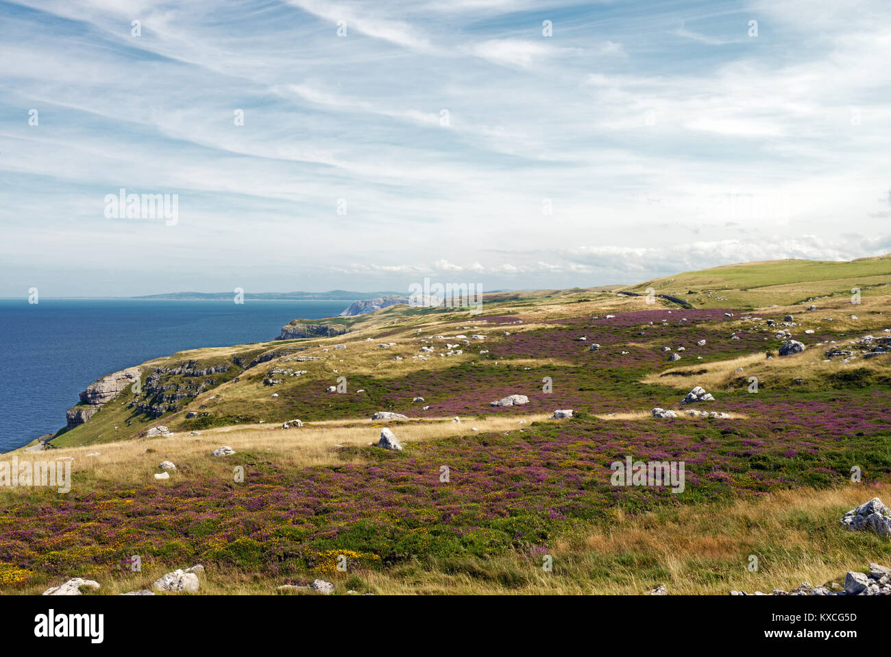 Limestone heath, here on the Great Orme in North Wales, is rare habitat. A considerable amount of soil leaching Stock Photo