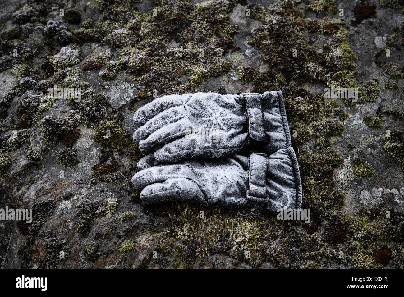 Gloves in frost Stock Photo