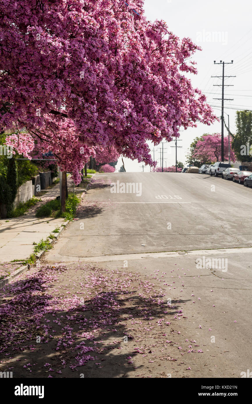 Petals falling on empty road against sky during sunny day - Stock Image