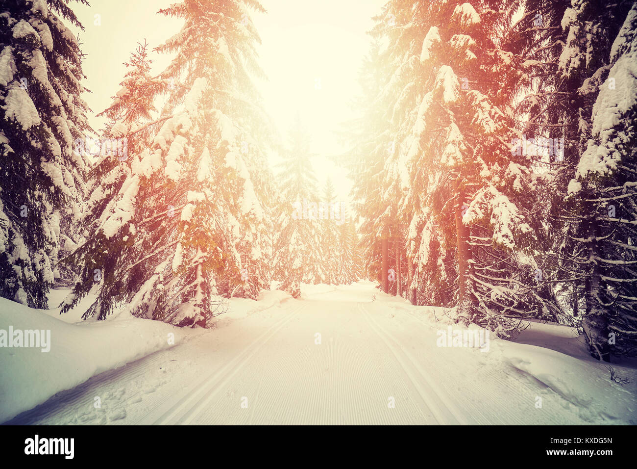 Retro stylized picture of a winter forest with cross country skiing tracks at sunset. - Stock Image