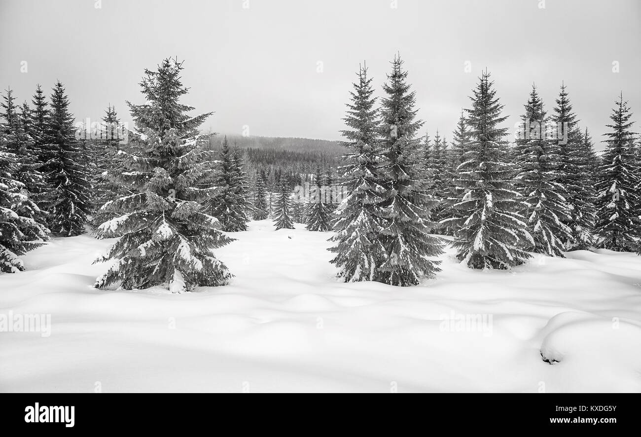 Black and white picture of a mountain winter landscape. - Stock Image