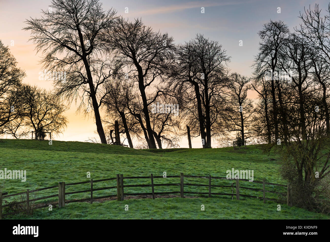 Looking through bare trees to a bright sky just before sunrise in Winter in the British countryside, UK. - Stock Image