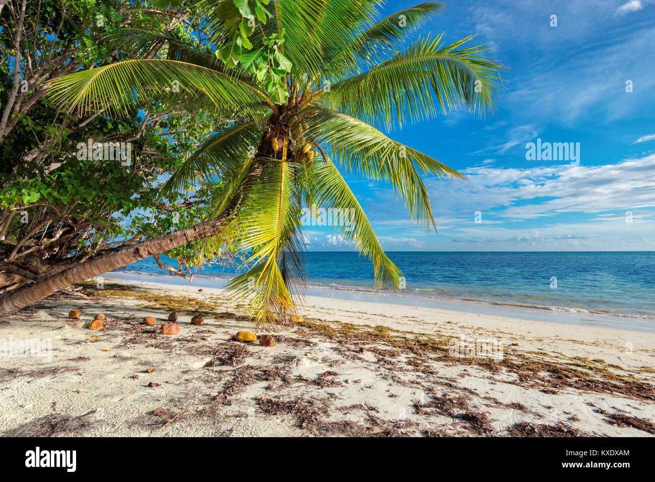 Untouched tropical beach in Seychelles - Stock Image