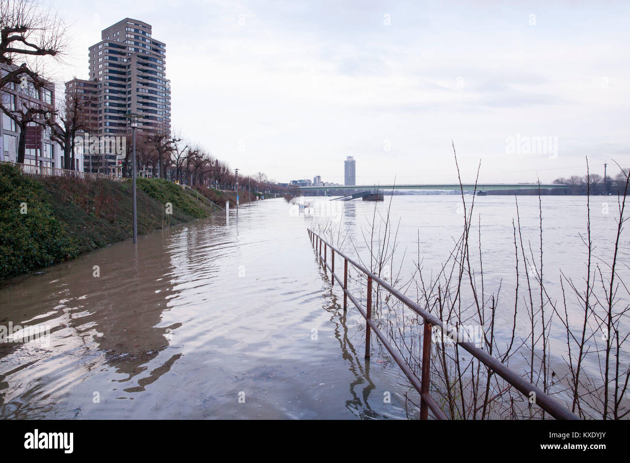 Cologne, Germany, 8. January 2018, flood of the river Rhine, in the background the Zoo bridge.  Köln, Deutschland, - Stock Image