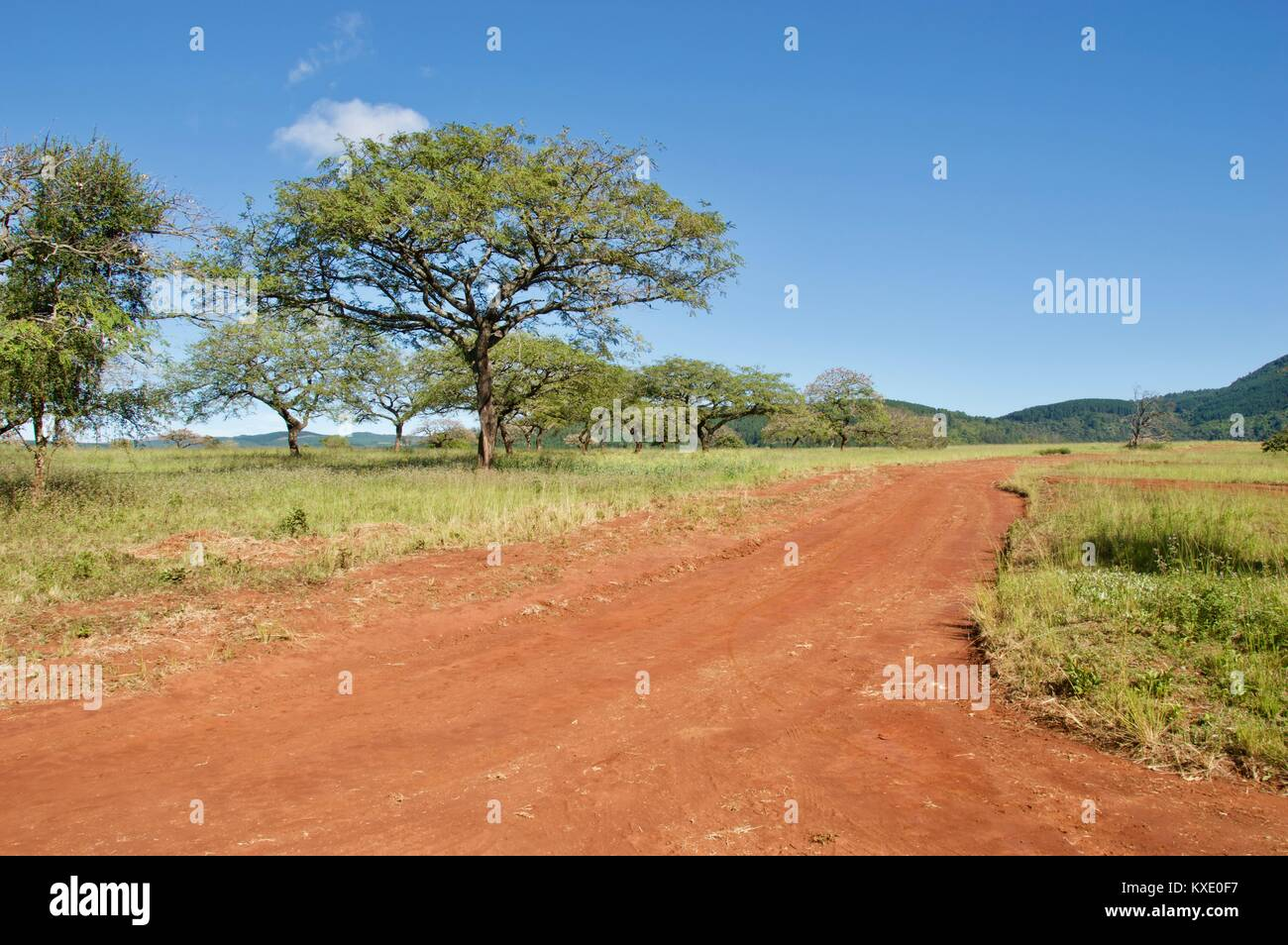 South African Safari and Nature parks Stock Photo