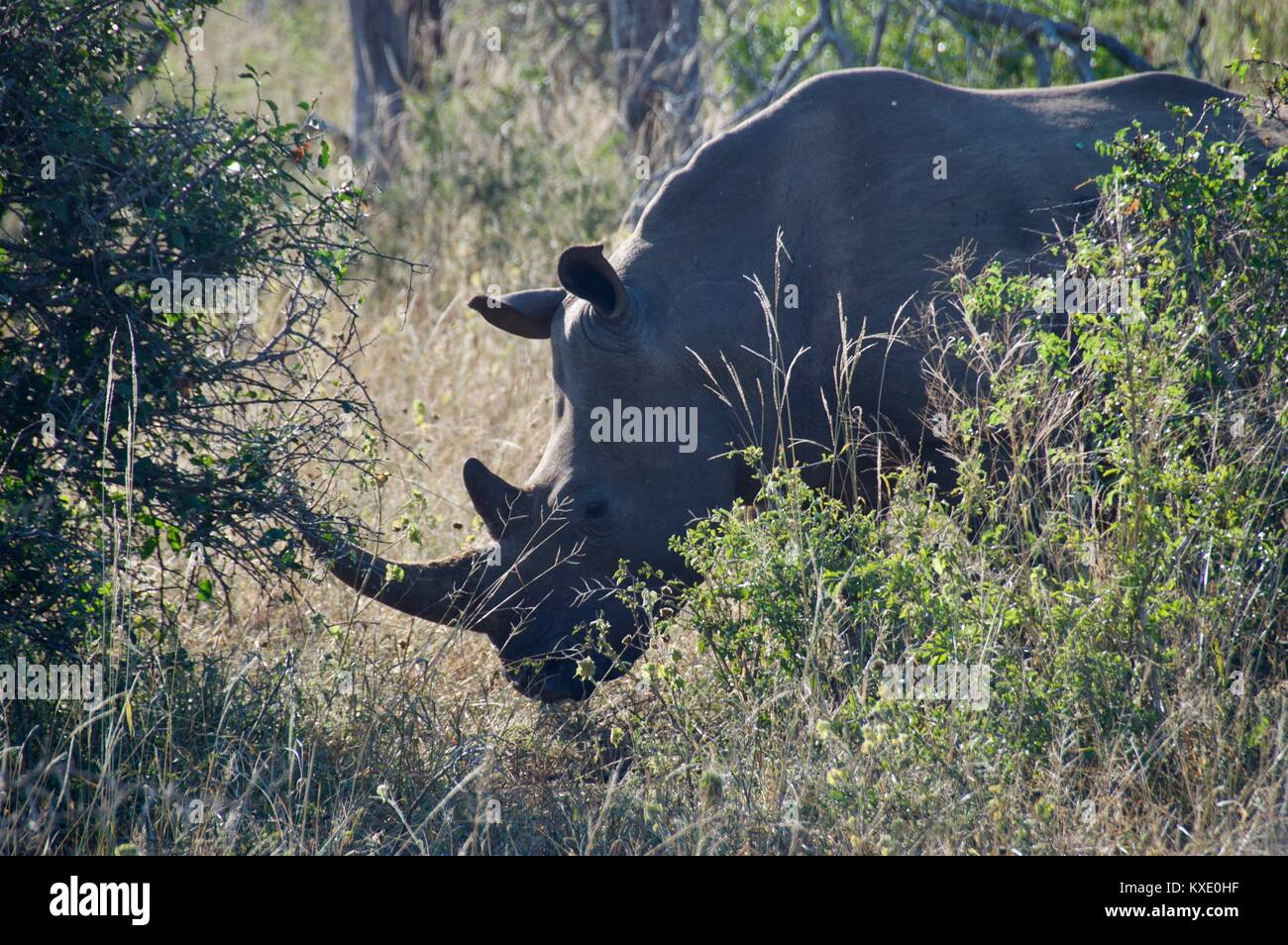 South African Safari and Nature parks - Stock Image