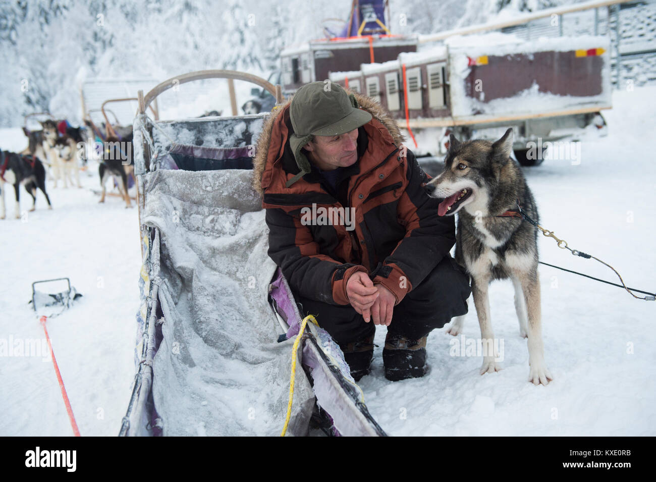 Siberian husky sled dog and musher portrait in Sweden. - Stock Image
