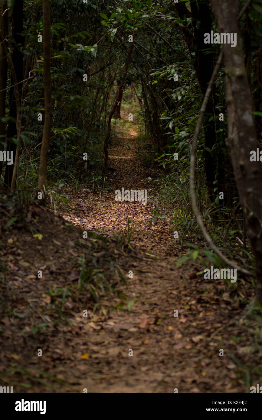 Leaf covered track path through dense forest jungle. Conceptual route direction way forward. - Stock Image