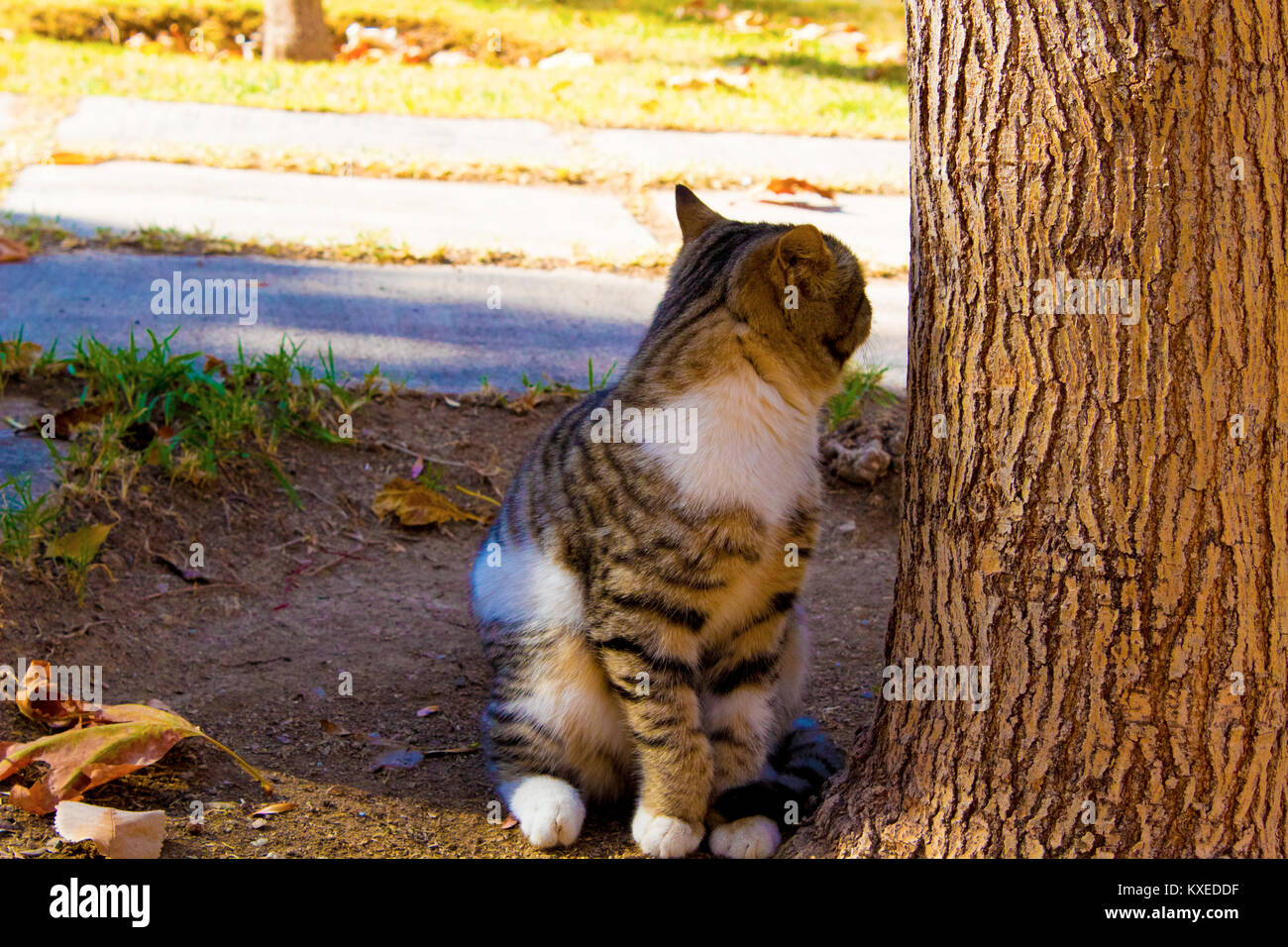 cat in the park waiting for - Stock Image