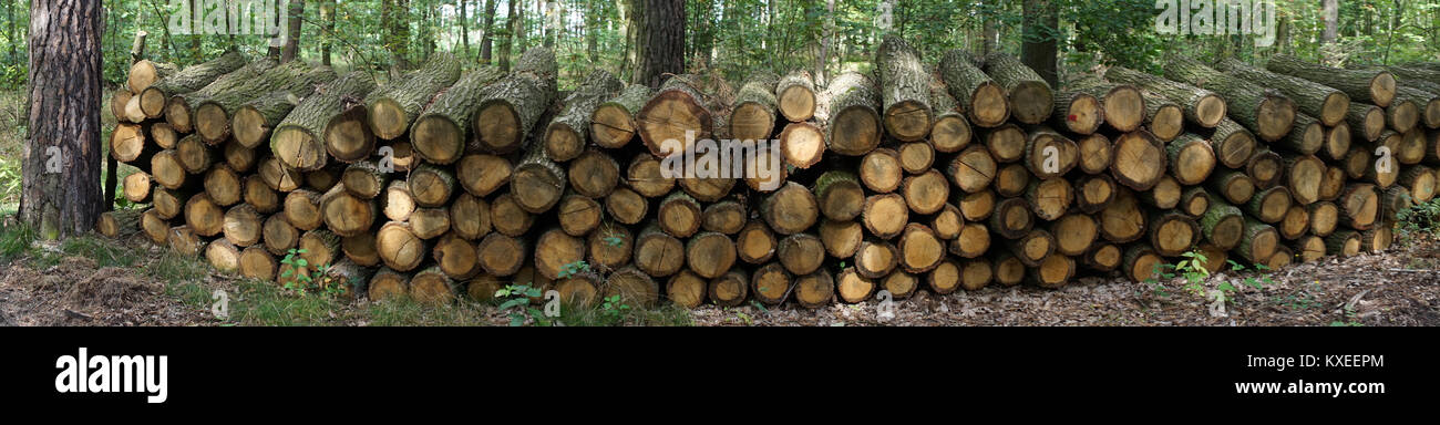 Firewood in the orest in Poland - Stock Image