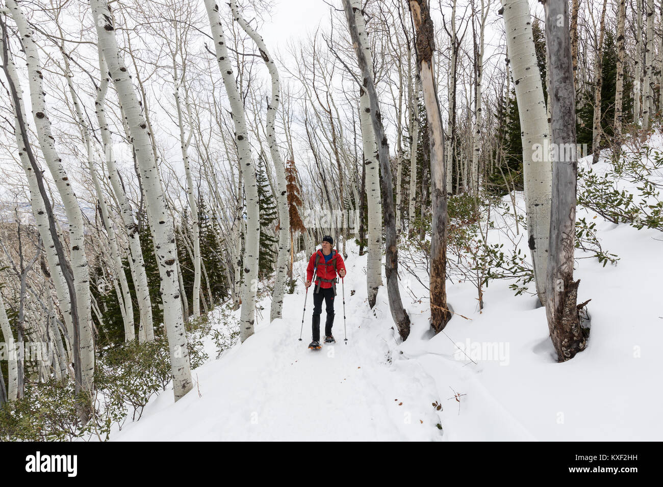 95cde19c1 A hiker snowshoes along Rob's Trail surrounded by beautiful winter ...