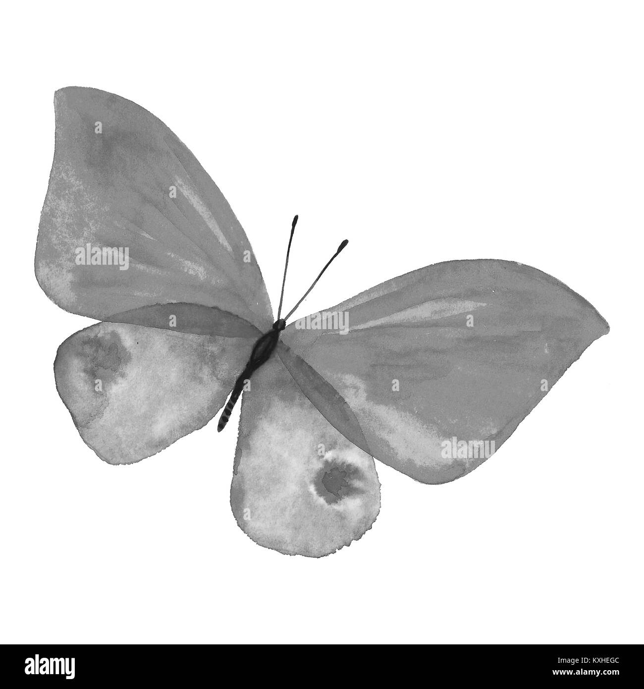 e6d6de0e6 Black and white butterfly. Illustration of an animal butterfly handmade.  Hand-painted insect