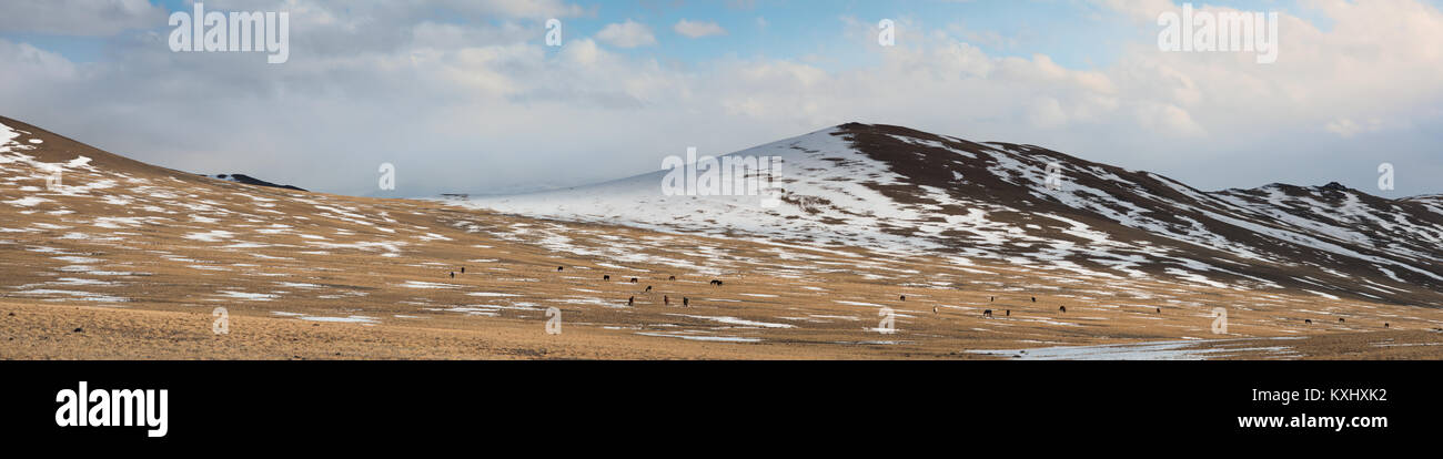 Mongolian landscape snowy mountains snow winter wild horses herd Mongolia panorama - Stock Image