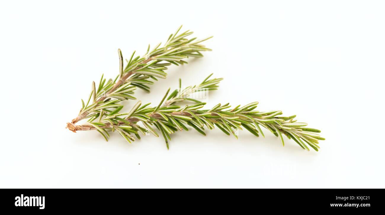 Fresh rosemary twig on white background - Stock Image