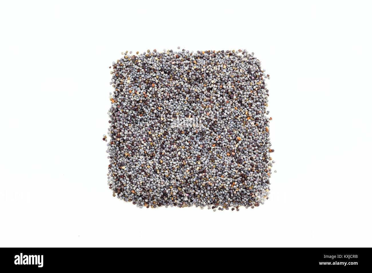 Black poppy seeds on white background - Stock Image