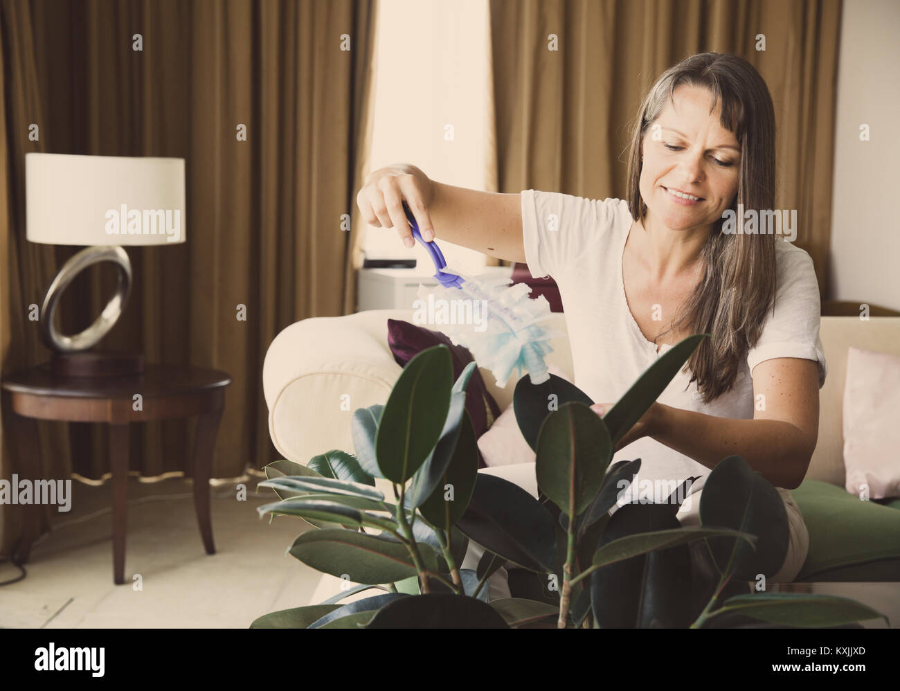 Mature woman is dusting rubber tree in her apartment - Stock Image
