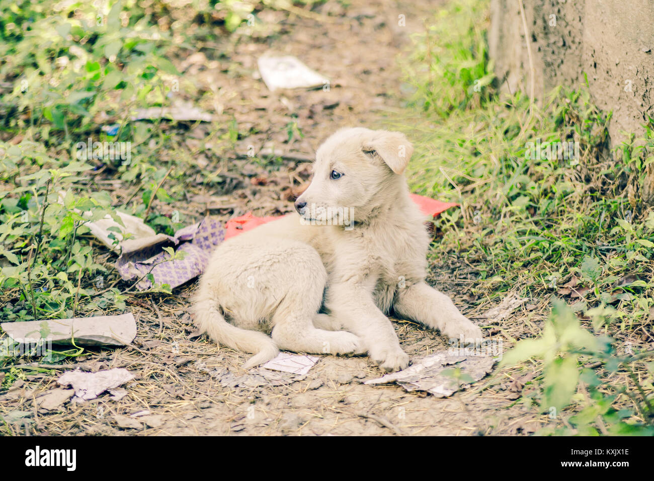 Manali life - Himachal Pradesh - India © Sauriêl Ltd   Samantha Scholl   fb.com/SaurielPhotography   www.saurielcreative.com - Stock Image