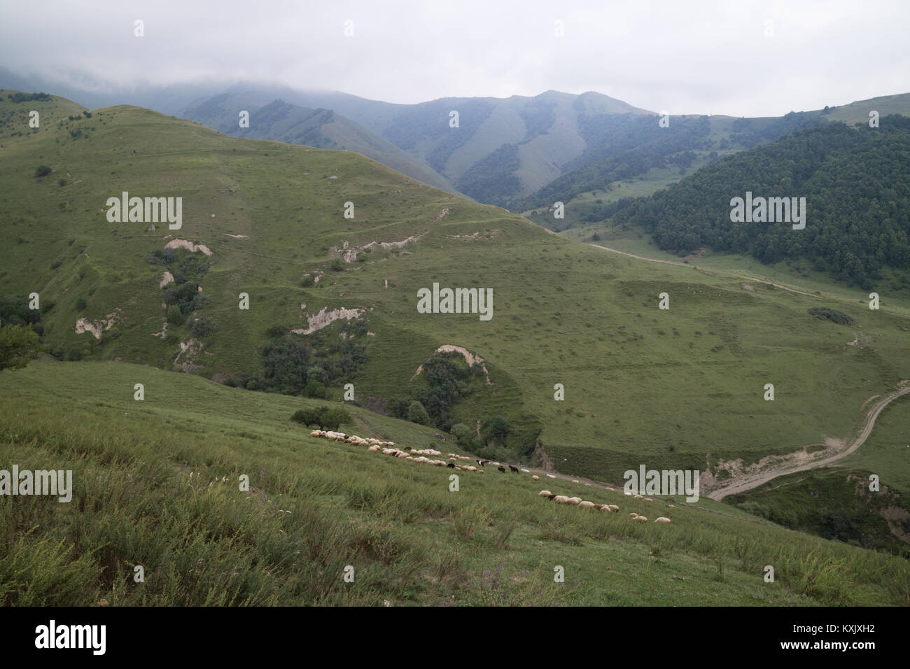Slopes of wild remote Caucasian mountains in Ingushetia/Chechnya, Russia - Stock Image