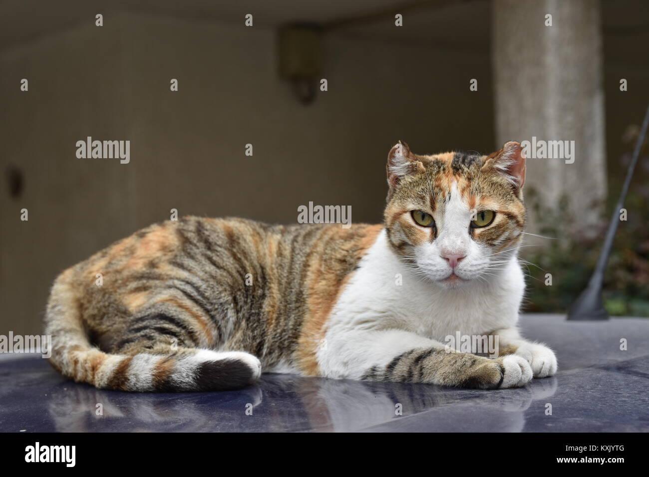 stray cat with my new sigma Stock Photo