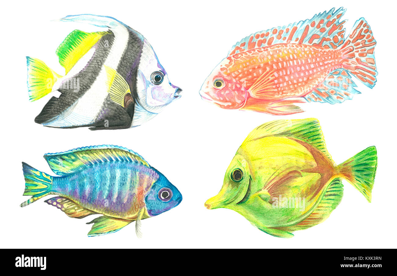 Watercolor collection of images of tropical fish. Figure aquarium inhabitants. Hand painted. Sea life. - Stock Image