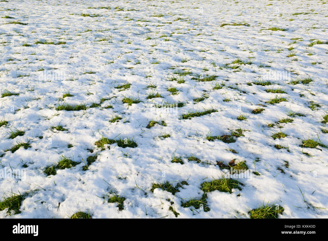 Melting snow with green grass patches poking through, Gloucestershire, England, United Kingdom, Europe - Stock Image