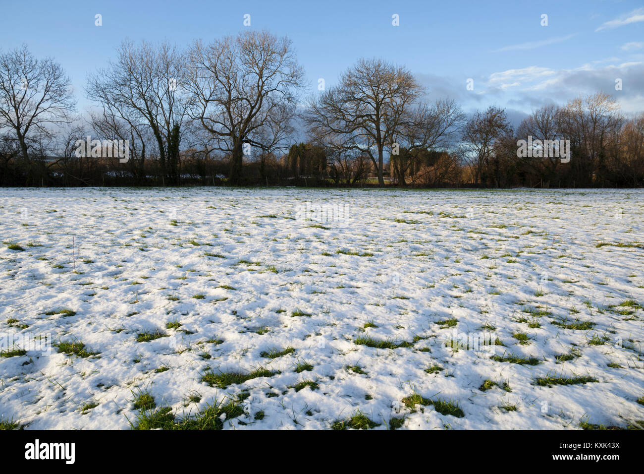 Melting snow with green grass patches poking through and bare winter trees behind, Ebrington, Cotswolds, Gloucestershire, - Stock Image