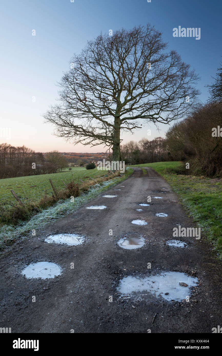 Farm track public footpath with bare tree and frozen puddles in winter, Ham Lane, Burwash, East Sussex, England, - Stock Image