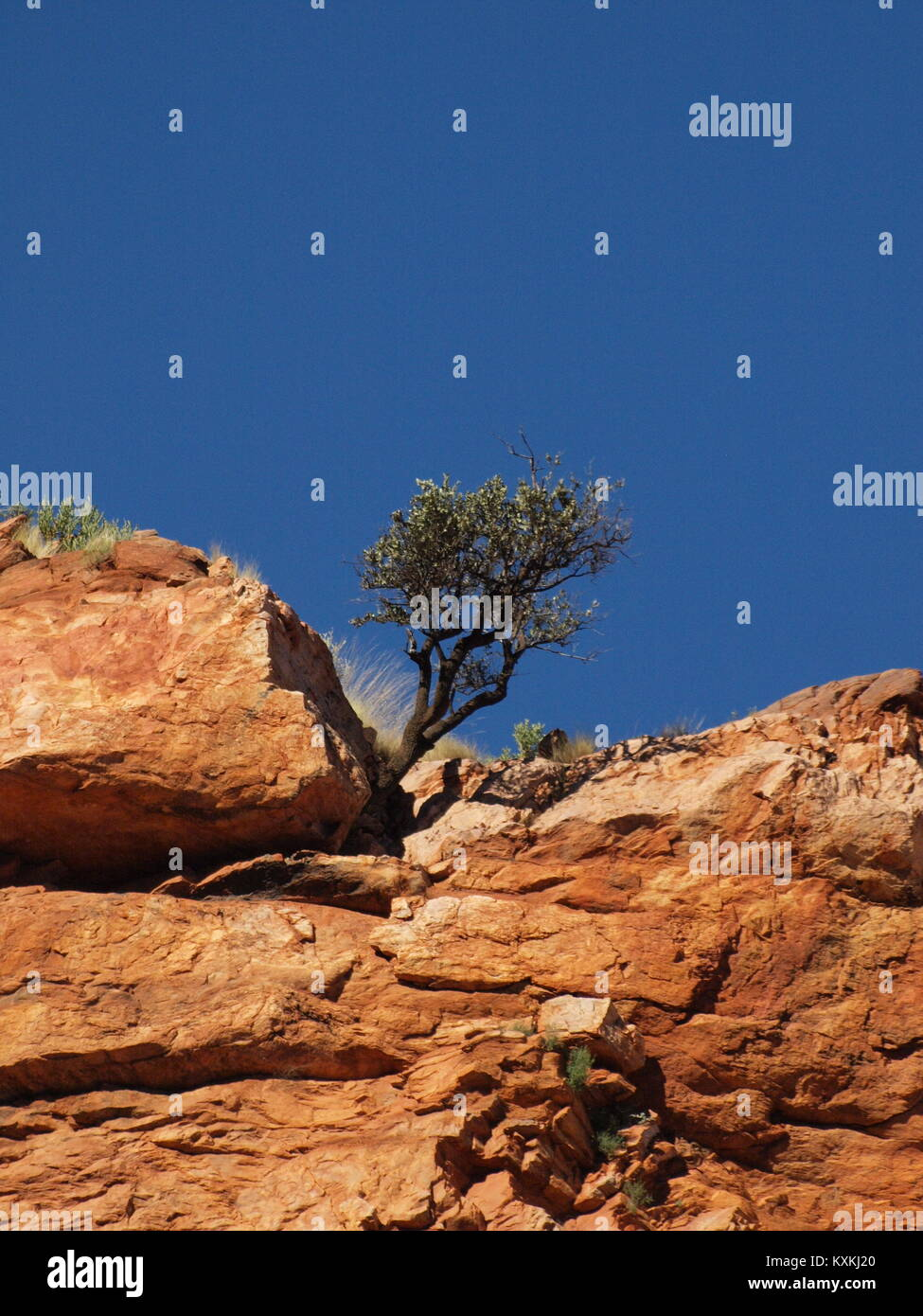 Eucalypt tree on the rim of ormiston gorge, northern territory, Australia - Stock Image