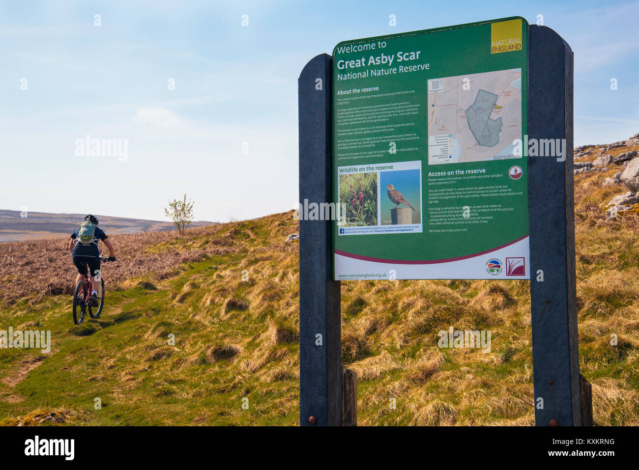 Female mountain biker passing Nature Reserve sign at Great Asby Scar National Nature Reserve in Cumbria - Stock Image