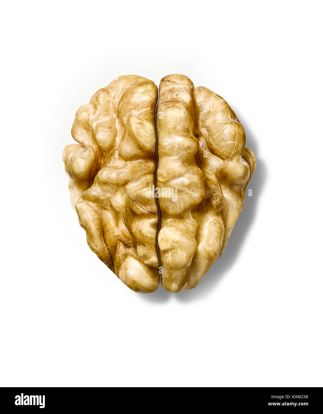 A clever shot of two halves of a Walnut positioned to look like or to form a brain shape. - Stock Image
