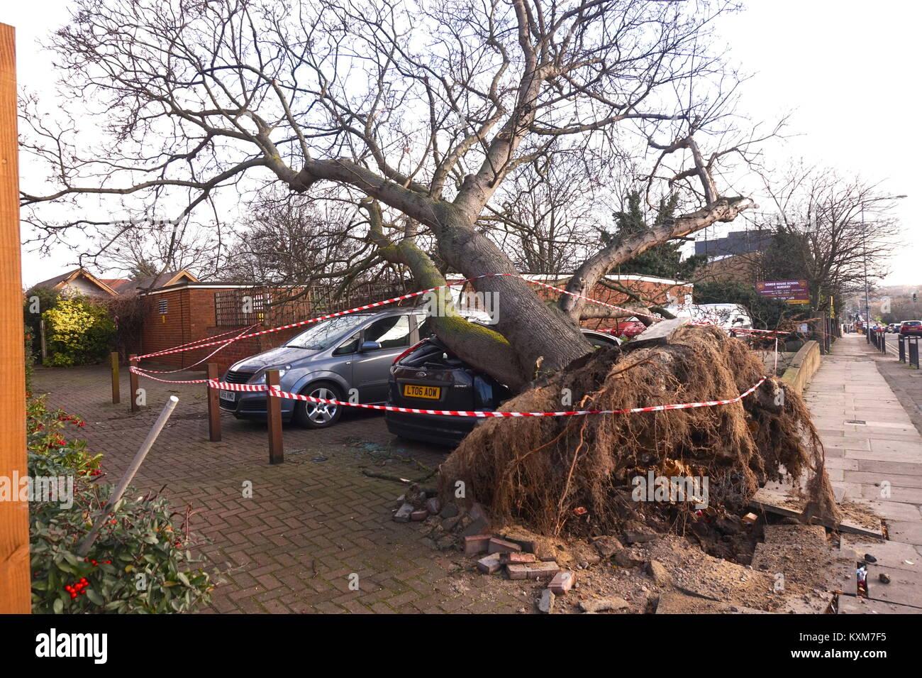 Giant tree falls onto car in Neasden, London, England Stock Photo