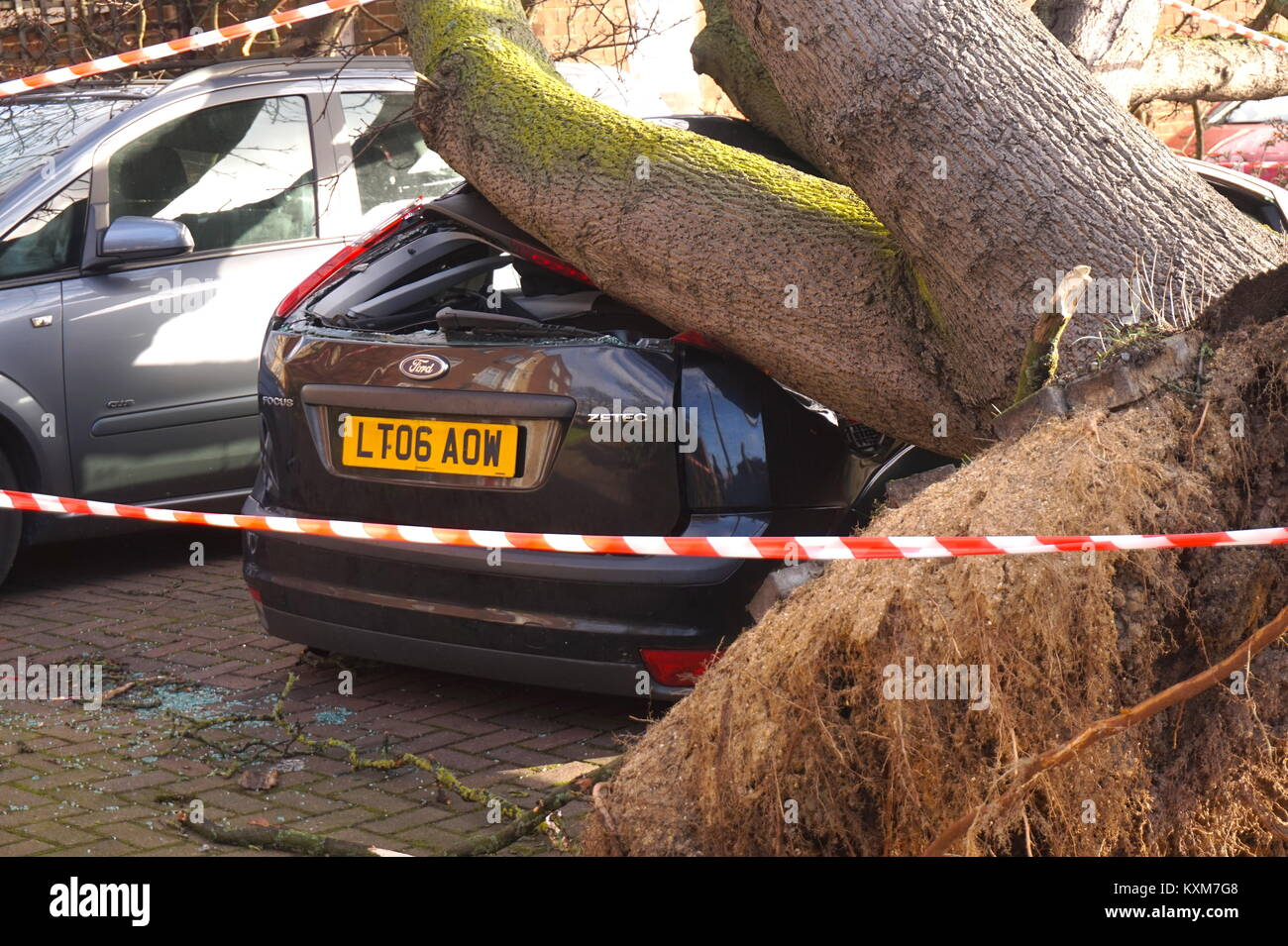 Giant tree falls onto car in Neasden, London, England Stock Photo