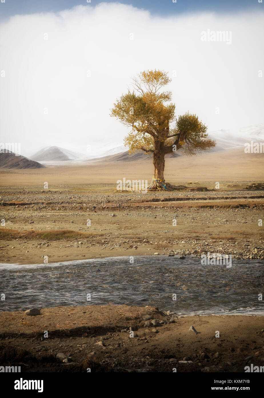 Mongolian yellow leafs lonely tree landscape snowy mountains snow winter cloudy Mongolia - Stock Image