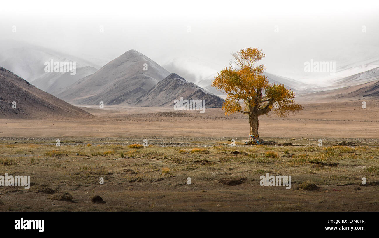 Mongolian lonely tree yellow leafs landscape snowy mountains snow winter cloudy Mongolia - Stock Image