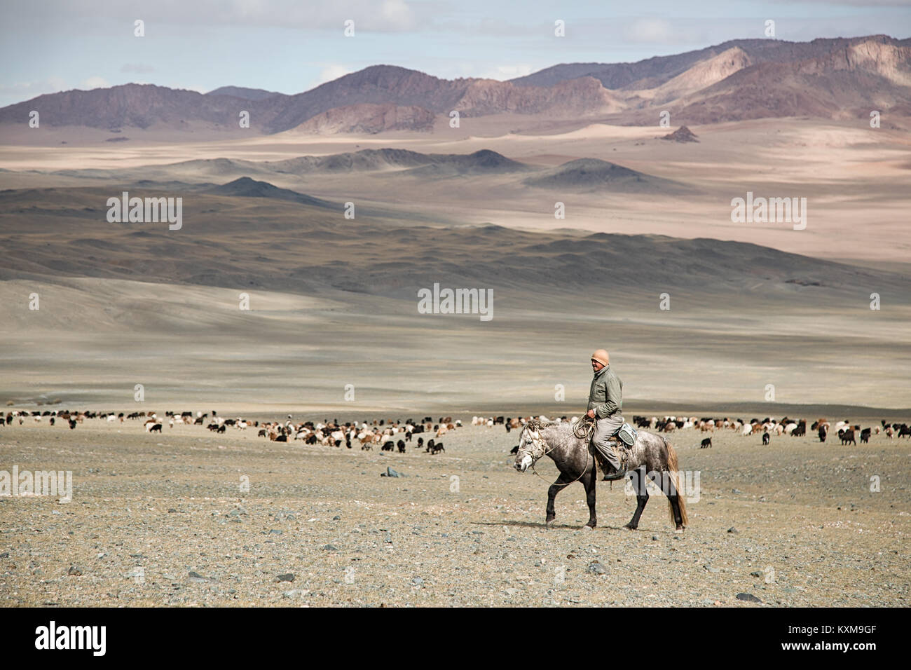 Goat keeper shepherd horseback rider Mongolian winter snowy mountains - Stock Image